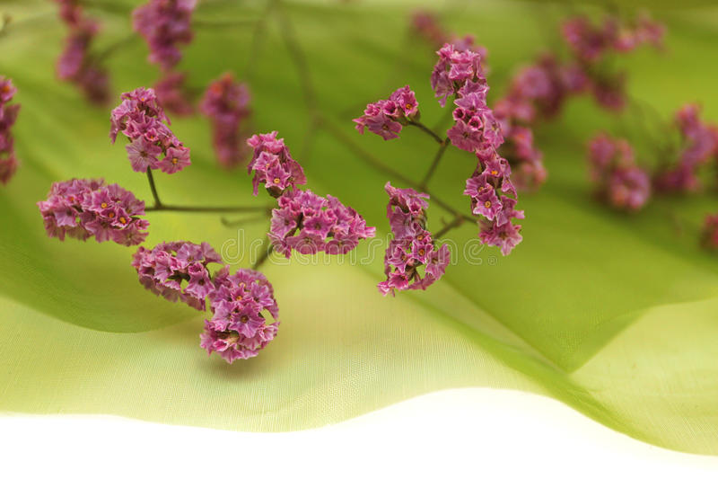 Flores no fundo verde macio da mola fotografia de stock royalty free