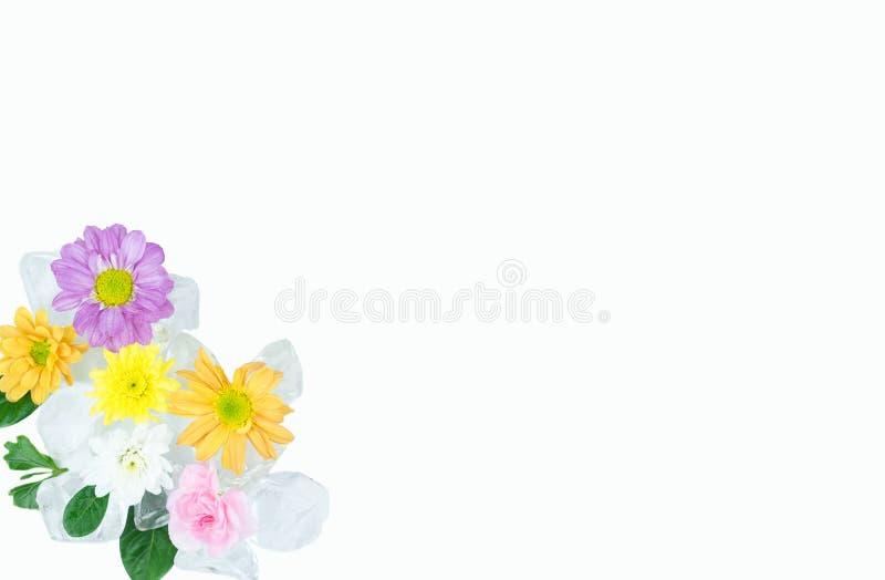 Flores no gelo com espaço da cópia sobre com fundo imagens de stock