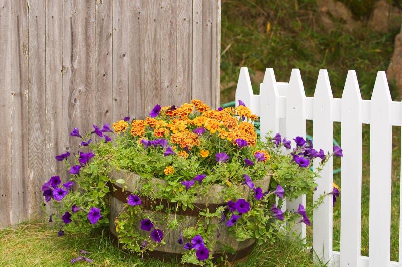 Flores no grande potenciômetro perto da cerca imagens de stock royalty free