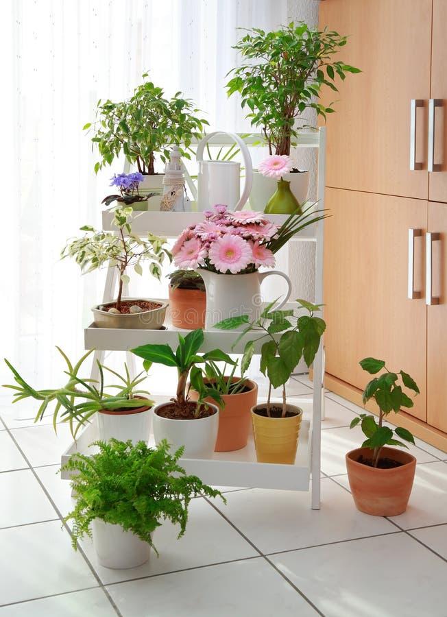 Flores no interior fotografia de stock