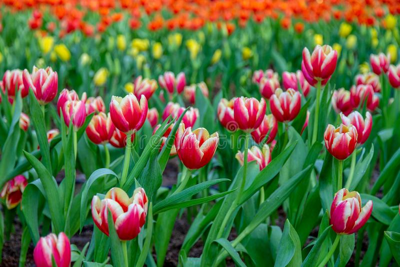 Flores no jardim fotografia de stock royalty free