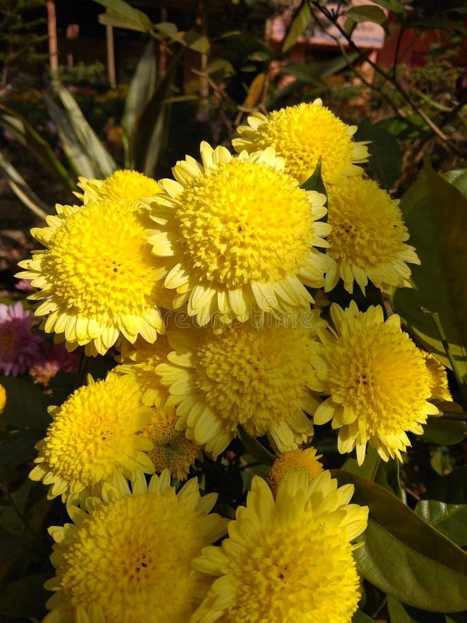 Flores no jardim da Índia fotos de stock