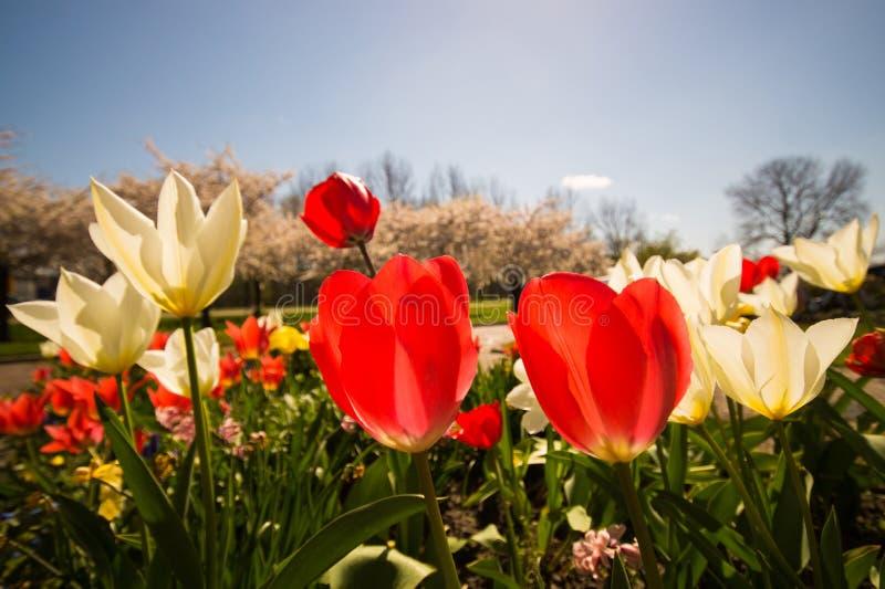 Flores No Jardim Ensolarado Domínio Público Cc0 Imagem