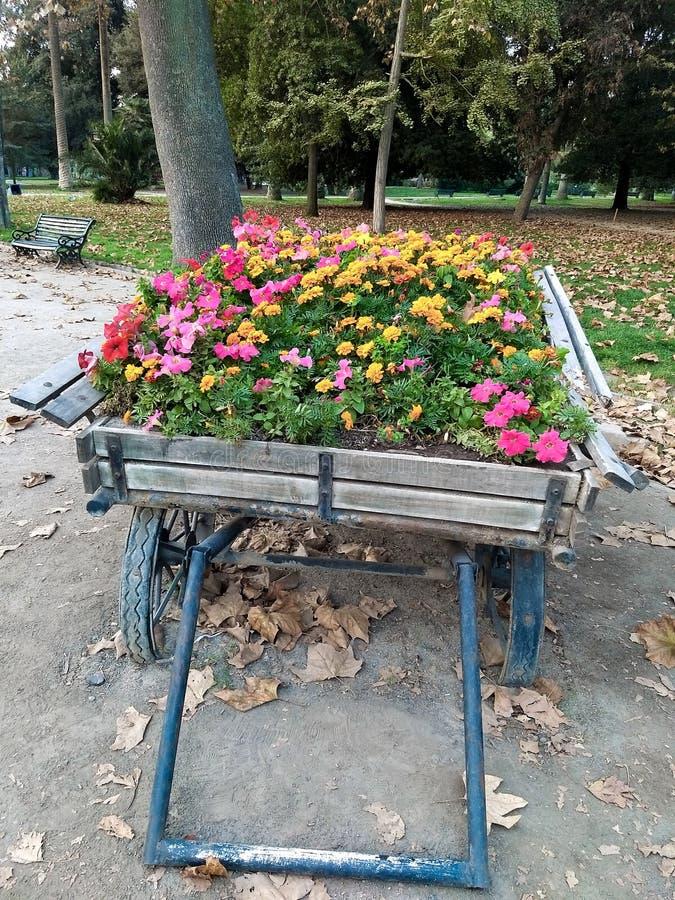 Flores no parque imagem de stock