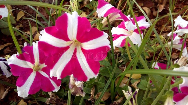 Flores no parque imagem de stock royalty free