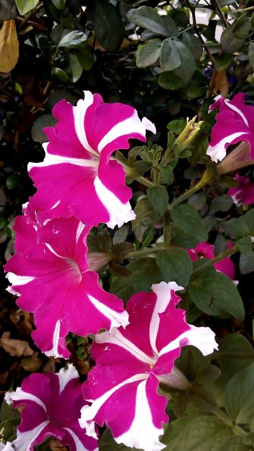 Flores no parque imagens de stock royalty free
