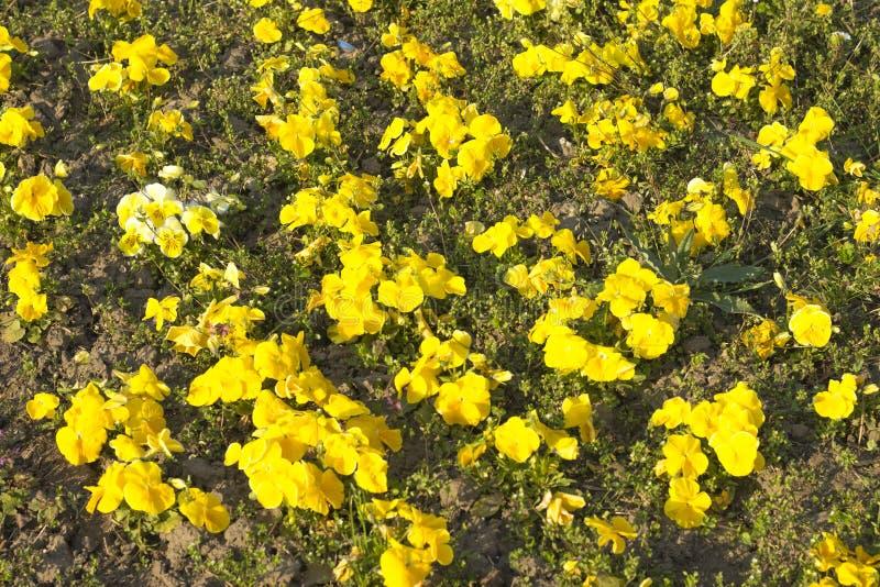 Flores no parque fotografia de stock