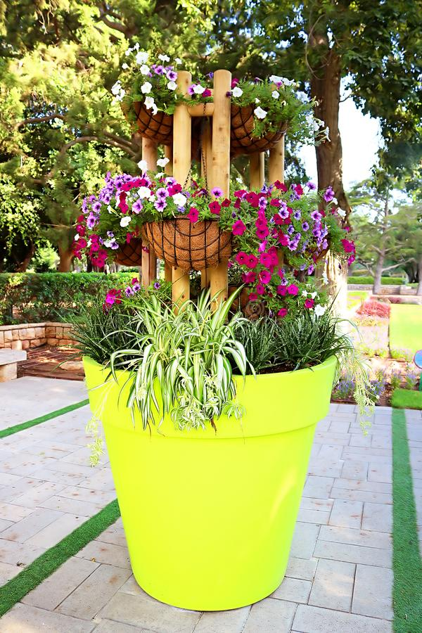 Flores no parque Ramat Hanadiv, jardins memoráveis de Baron Edmond de Rothschild imagens de stock