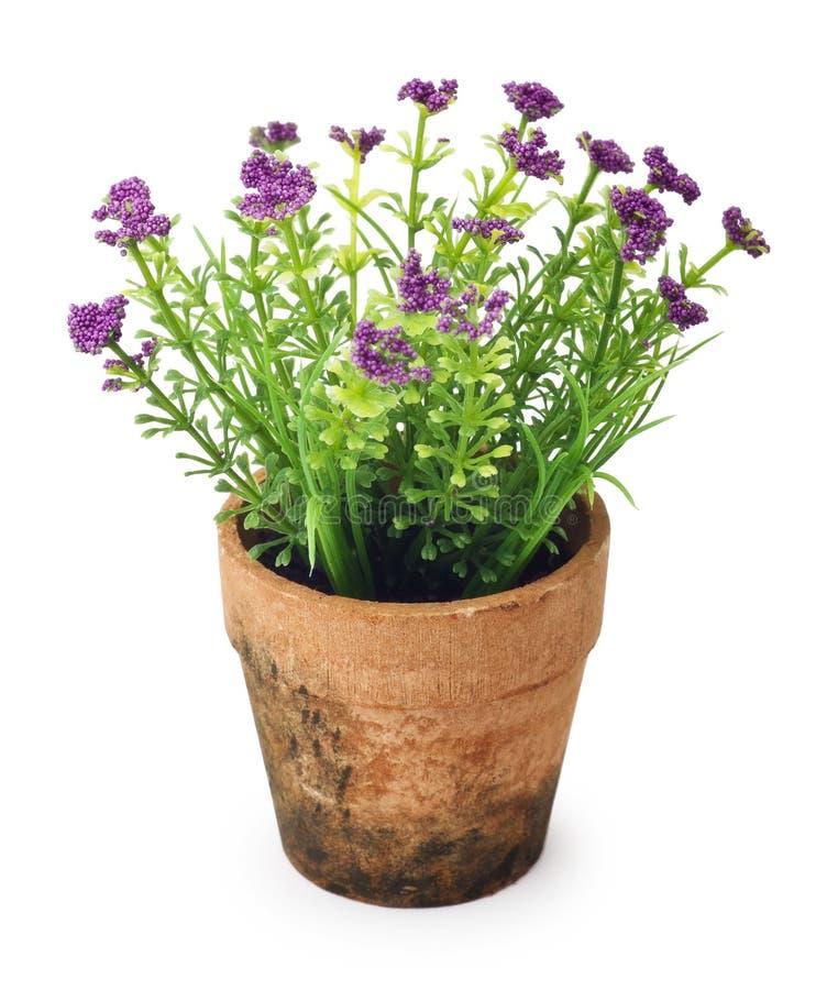 Flores no potenciômetro de flor fotografia de stock royalty free