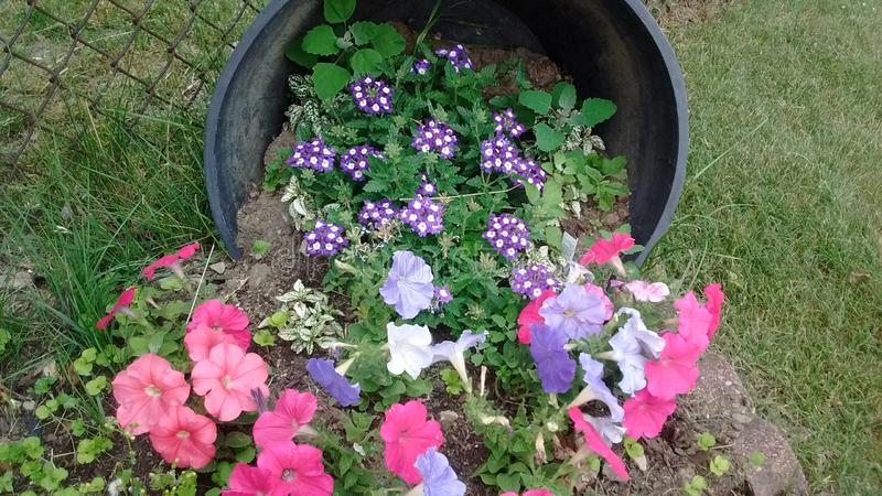 Flores no sideof fotos de stock royalty free