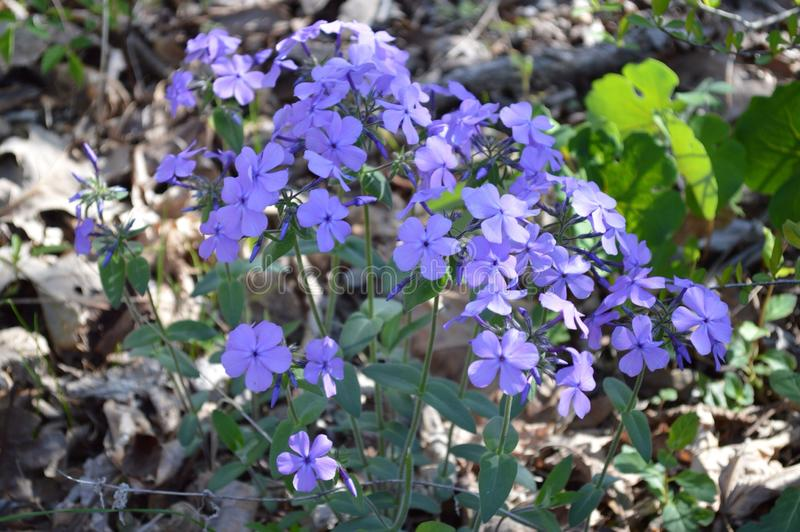 Flores no sol foto de stock