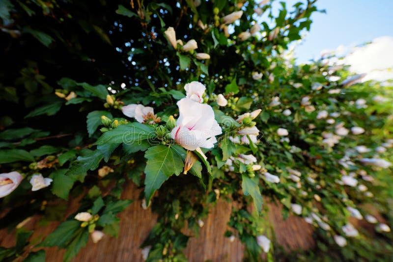 Flores no tiro do ângulo do arbusto fotos de stock royalty free