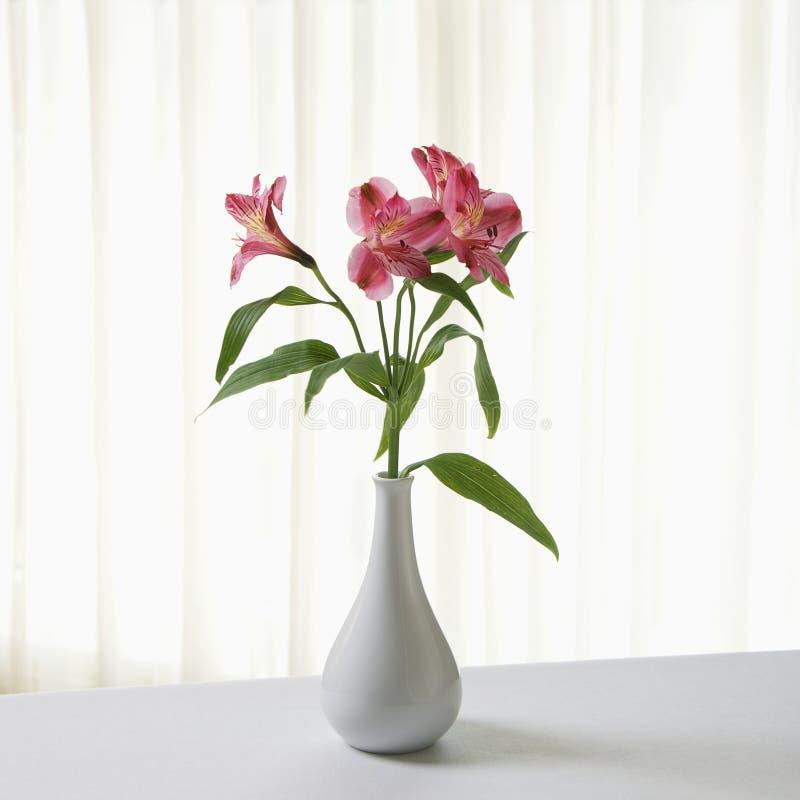Flores no vaso. imagem de stock