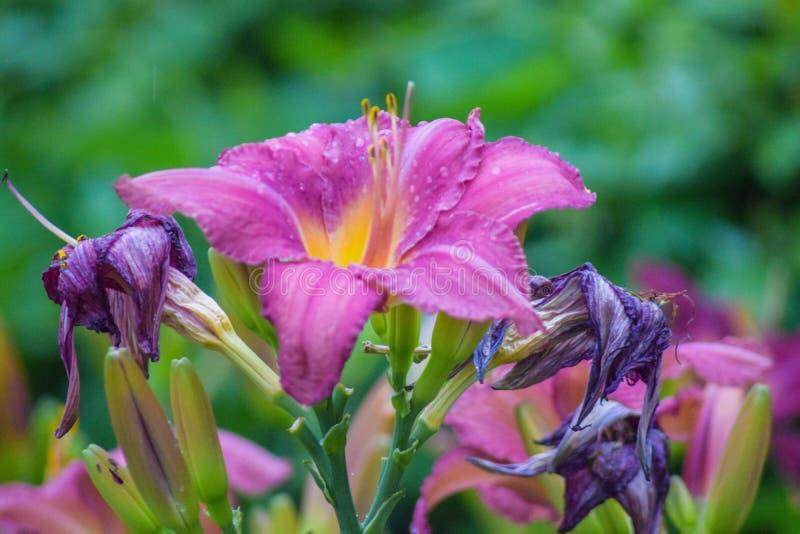 Flores no verão fotografia de stock royalty free