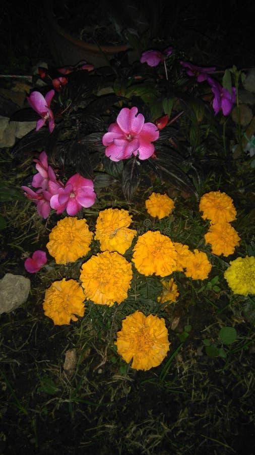 Flores-noche stockbilder