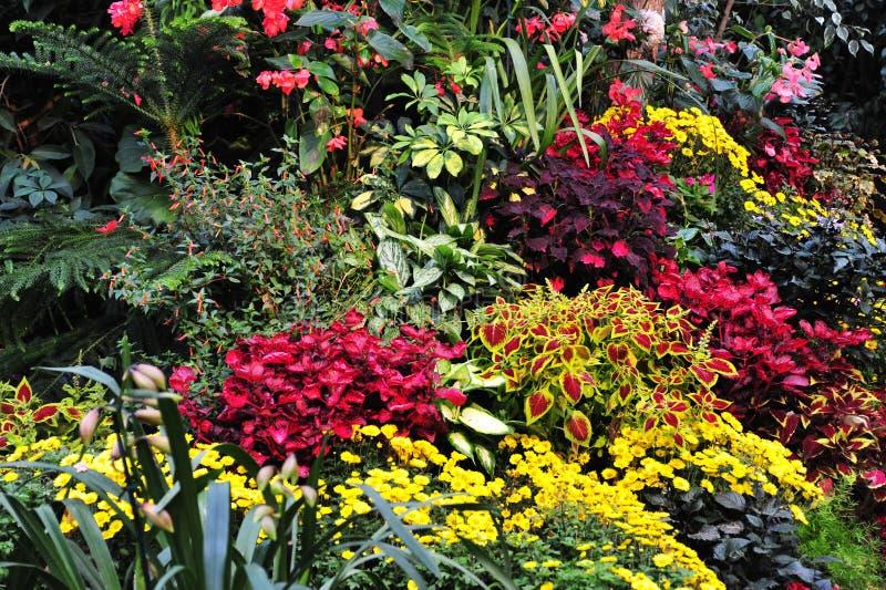 Flores nos jardins imagem de stock royalty free
