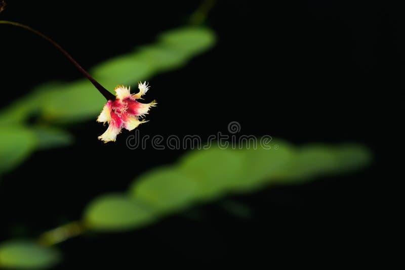 Flores novas bonitas da grama em um fundo preto fotos de stock royalty free