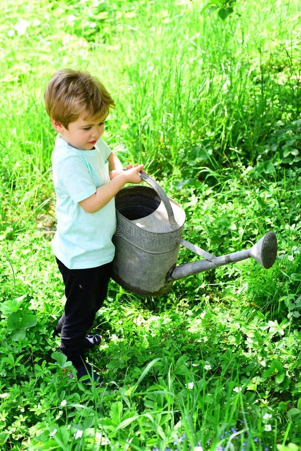 Flores novas da água do menino e grama verde com a ajuda do potenciômetro molhando velho, grande e pesado A criança ajuda com o j fotografia de stock royalty free