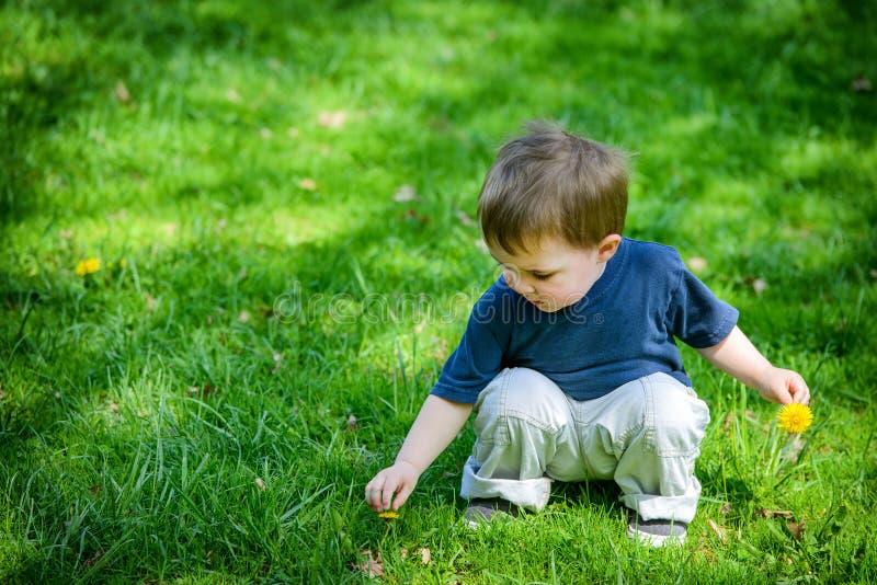 Flores novas do dente-de-leão da colheita do menino foto de stock royalty free