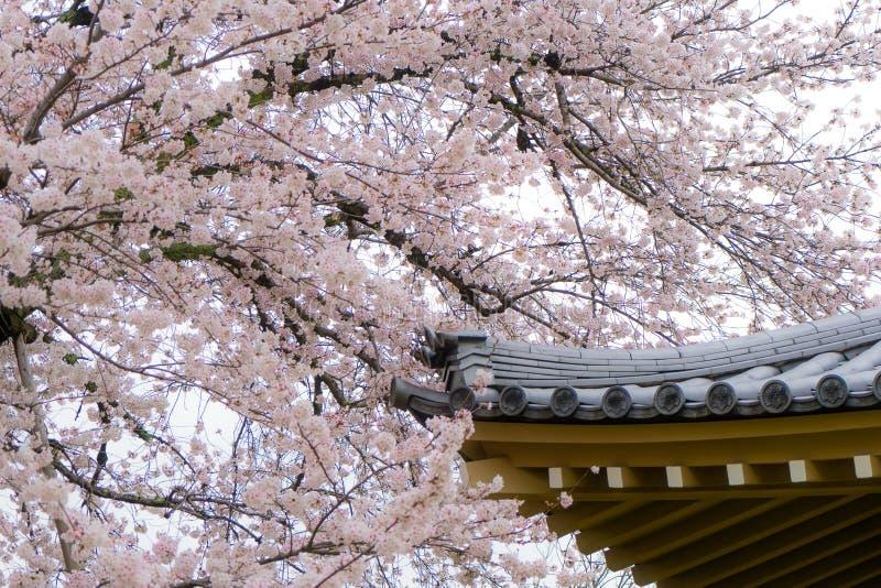 Flores o flor de cerezo de Sakura con el tejado de la casa en Kyoto, Japón fotografía de archivo libre de regalías