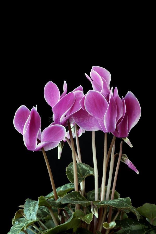 Flores originais fotografia de stock