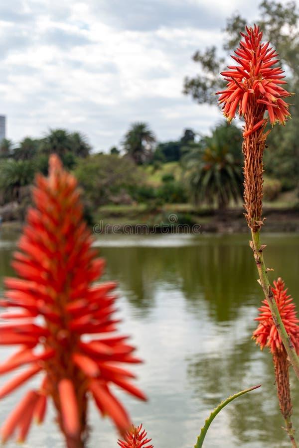 Flores ou plantas carnudas do cacto na chegada do inverno imagens de stock royalty free
