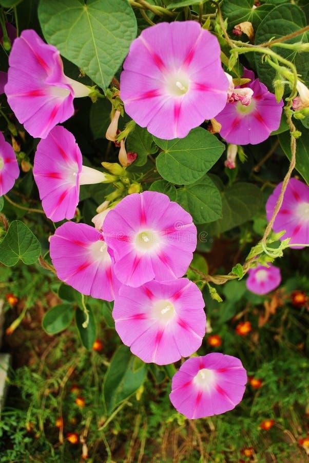 Download Flores púrpuras foto de archivo. Imagen de hermoso, verano - 44854226