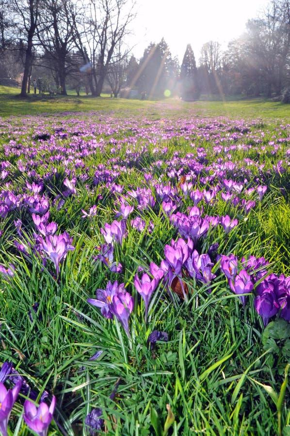Flores púrpuras bajo el sol imagenes de archivo