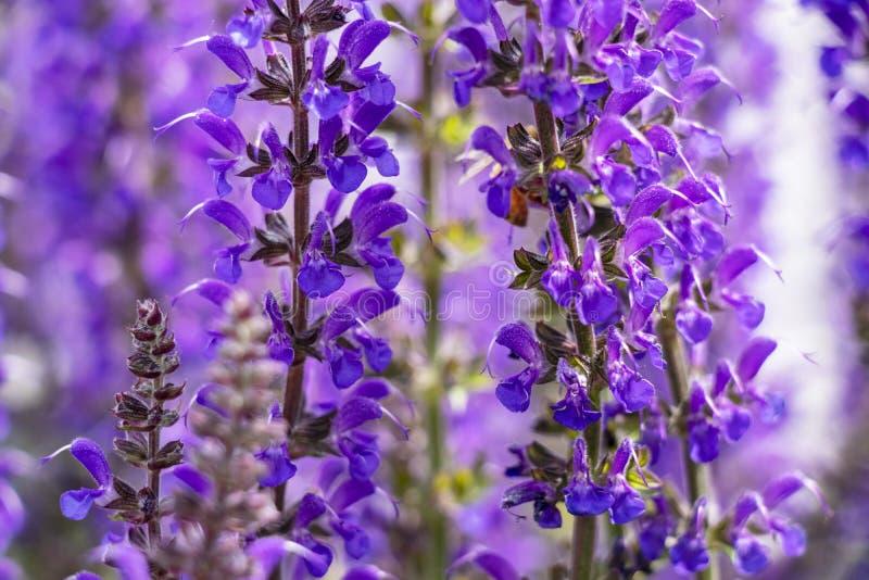 Flores púrpuras brillantes en el parque foto de archivo libre de regalías