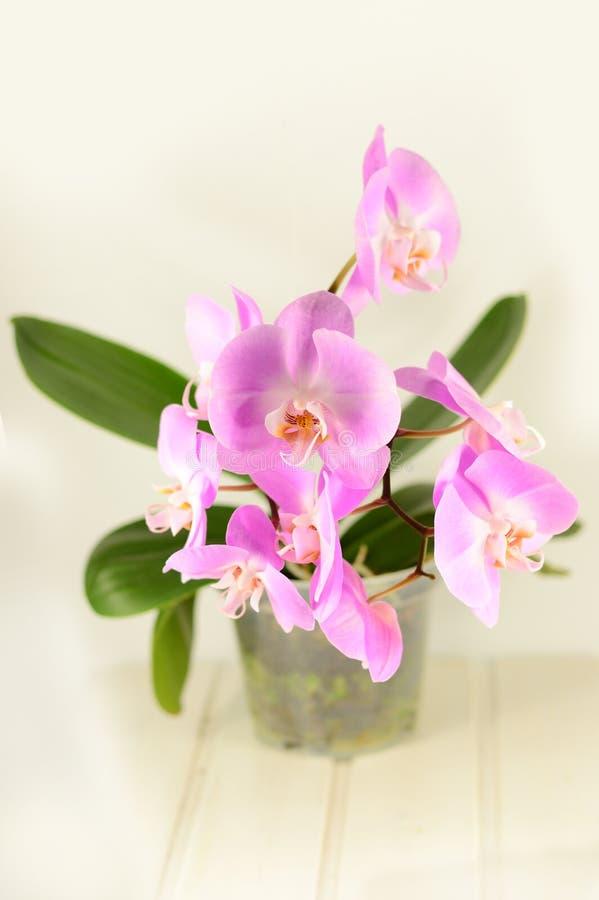 Flores púrpuras coloridas de la orquídea imágenes de archivo libres de regalías