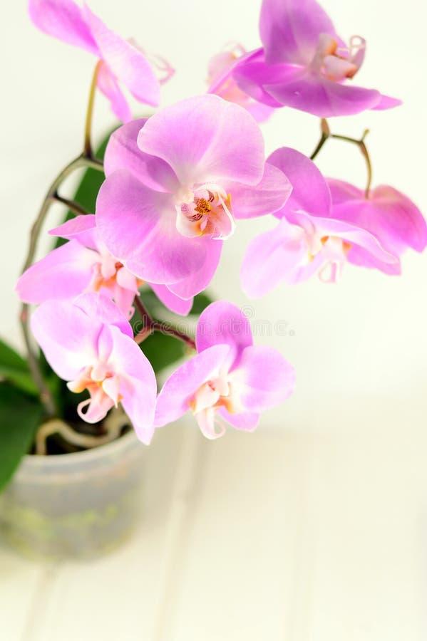 Flores púrpuras coloridas de la orquídea imagenes de archivo