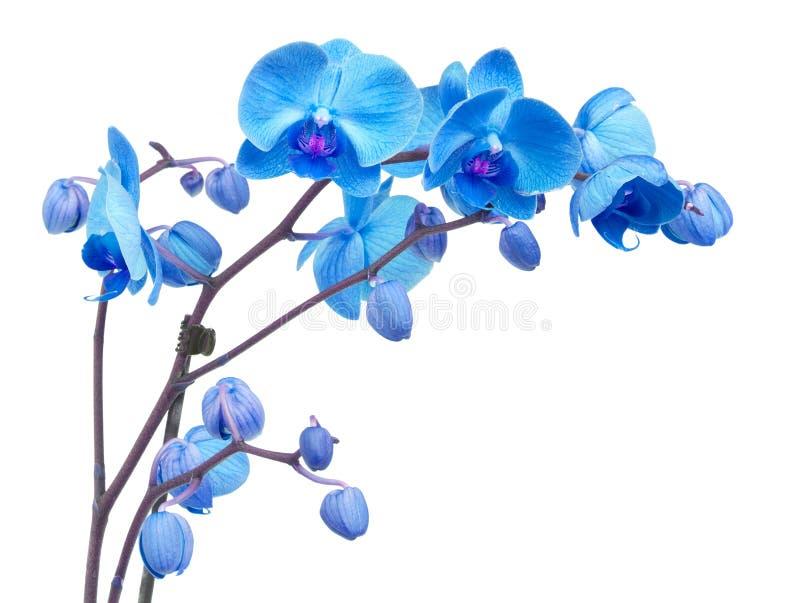 Flores púrpuras coloridas de la orquídea imagen de archivo