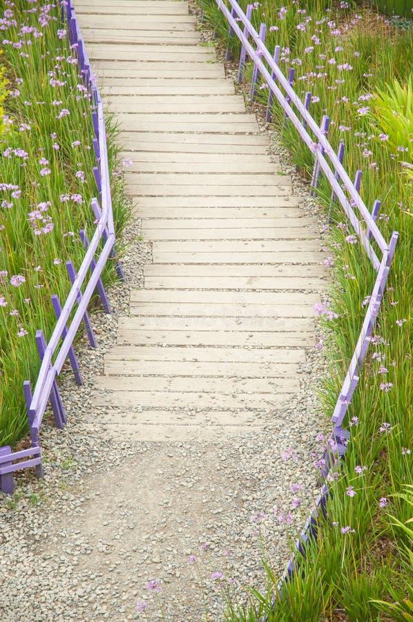 Flores púrpuras con el camino de madera imagen de archivo