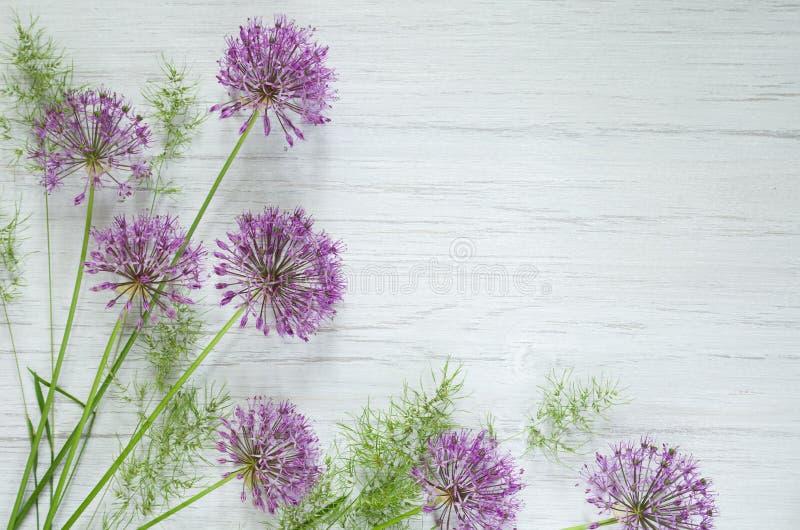 Flores púrpuras de la cebolla decorativa del allium en tronco y el fondo rústico de madera blanco de la tabla Fondo hermoso del r fotografía de archivo
