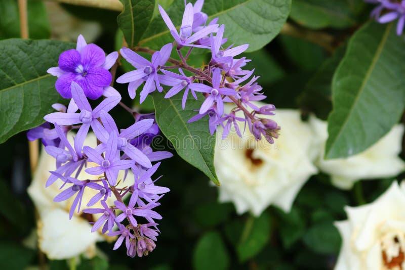Flores púrpuras de la guirnalda fotos de archivo