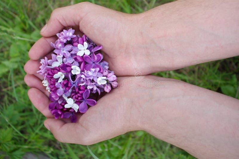 Flores púrpuras de la lila en manos foto de archivo