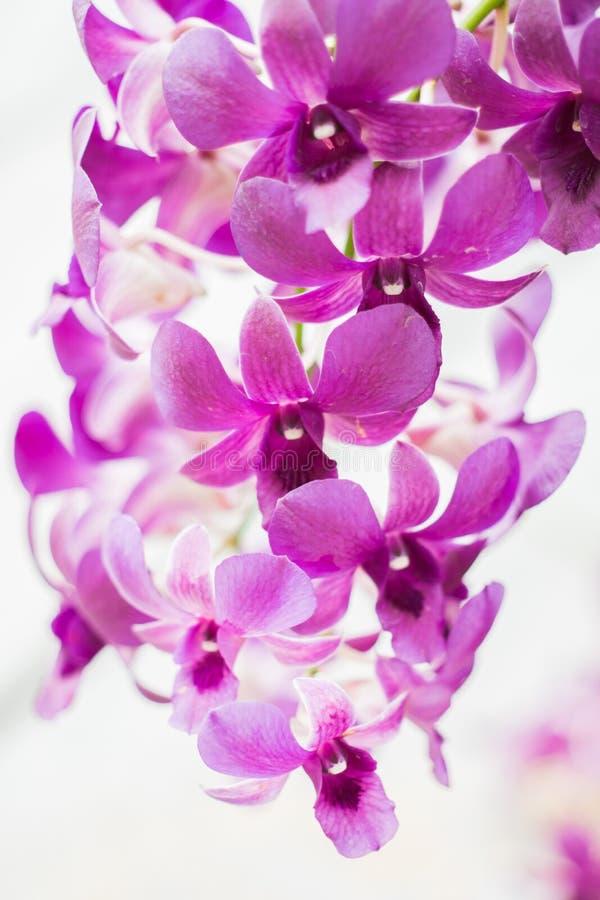 Flores púrpuras de la orquídea en árbol imagenes de archivo