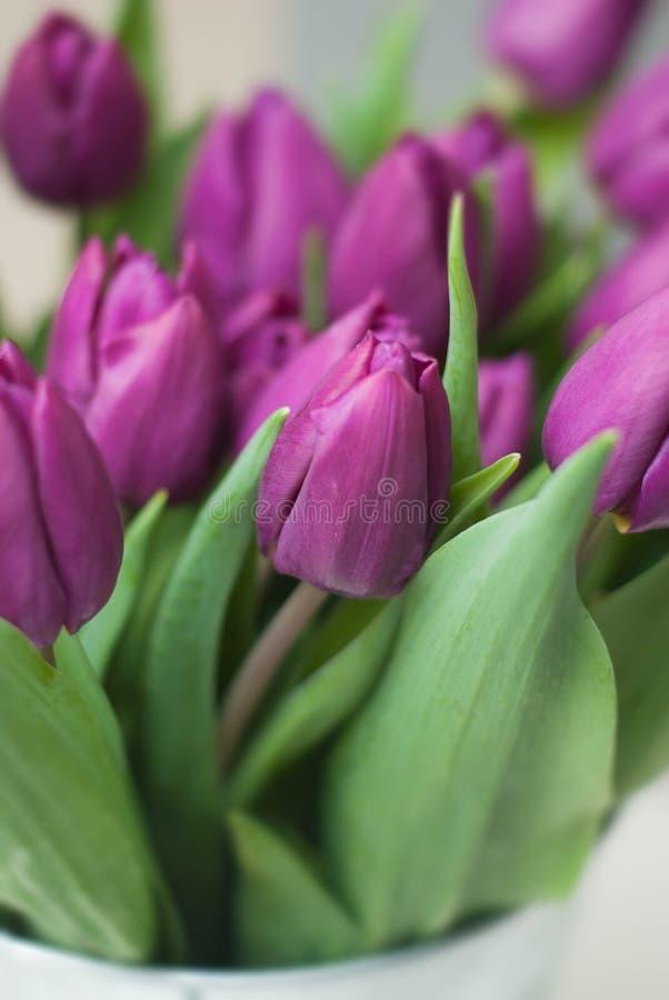 Flores púrpuras de la primavera y del verano del ramo de los tulipanes ciérrese encima de las flores violetas Imagr vertical imágenes de archivo libres de regalías