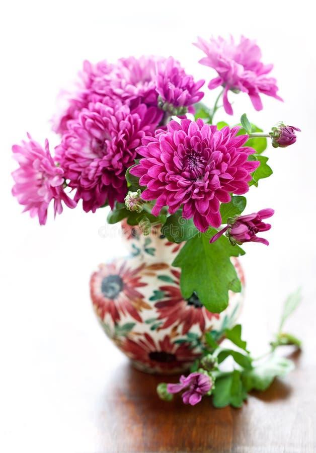 Flores púrpuras del crisantemo imagen de archivo
