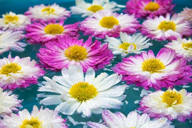 Flores púrpuras en el agua azul azul, fondo de la naturaleza, papel pintado fotografía de archivo libre de regalías