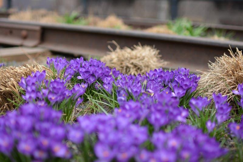 Flores púrpuras en el Highline fotografía de archivo libre de regalías