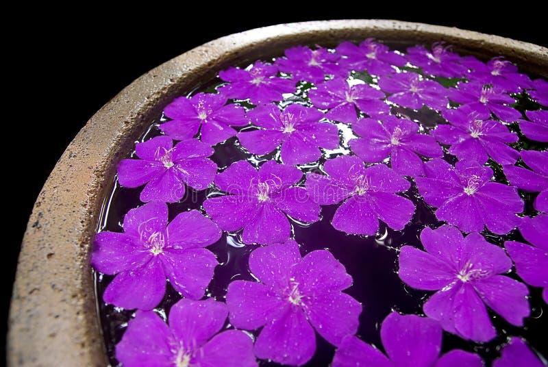 Flores púrpuras en un crisol imagenes de archivo