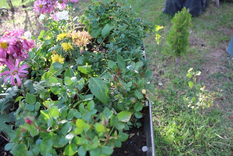 Flores púrpuras encima de la yarda cercana g imagen de archivo