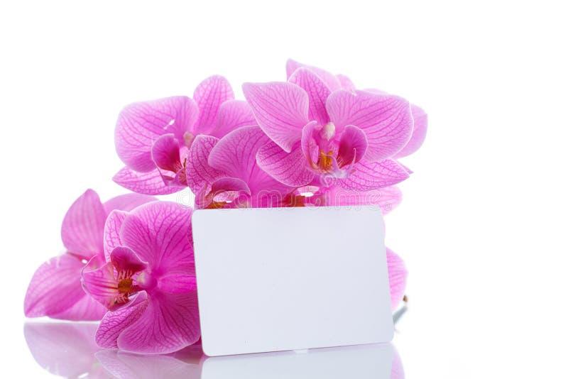Flores púrpuras hermosas del phalaenopsis foto de archivo libre de regalías