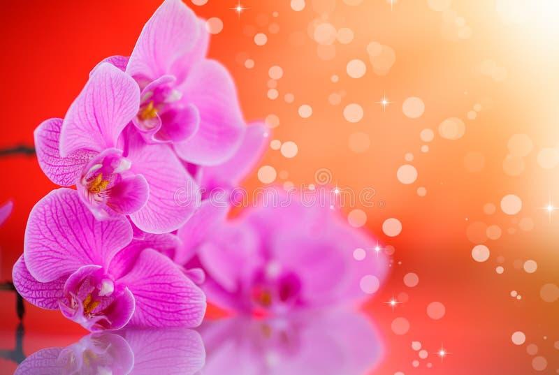 Flores púrpuras hermosas del phalaenopsis fotos de archivo libres de regalías