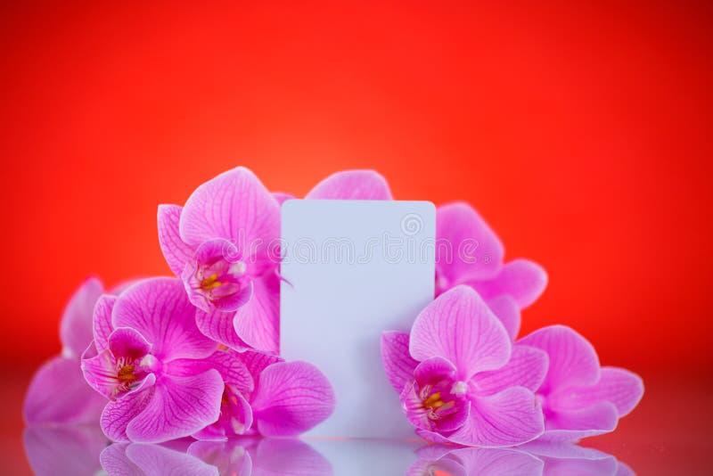 Flores púrpuras hermosas del phalaenopsis imagen de archivo libre de regalías