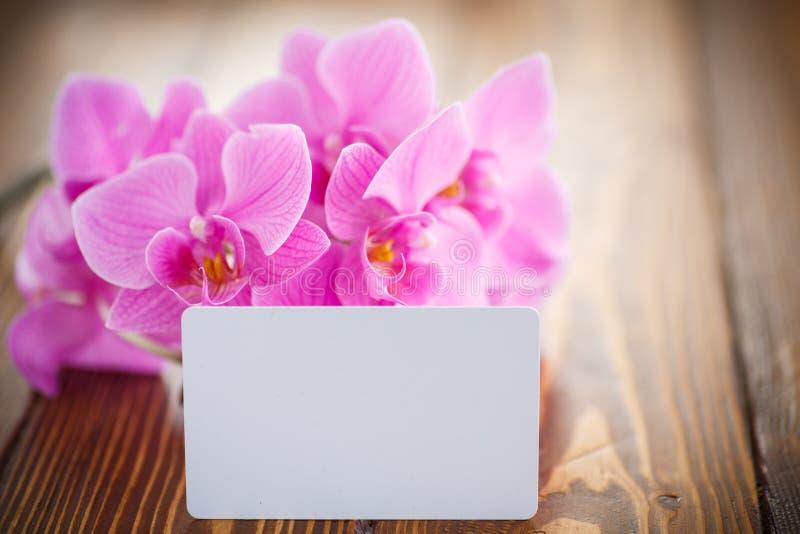 Flores púrpuras hermosas del phalaenopsis fotos de archivo