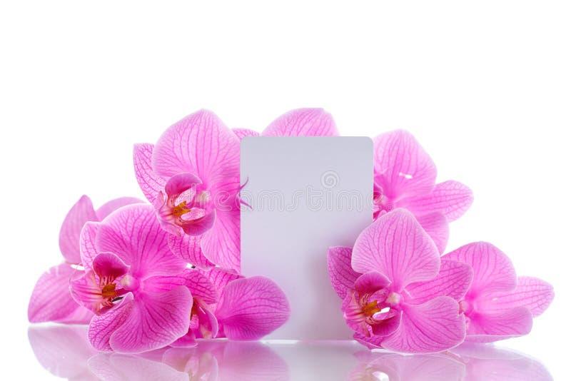 Flores púrpuras hermosas del phalaenopsis fotografía de archivo libre de regalías
