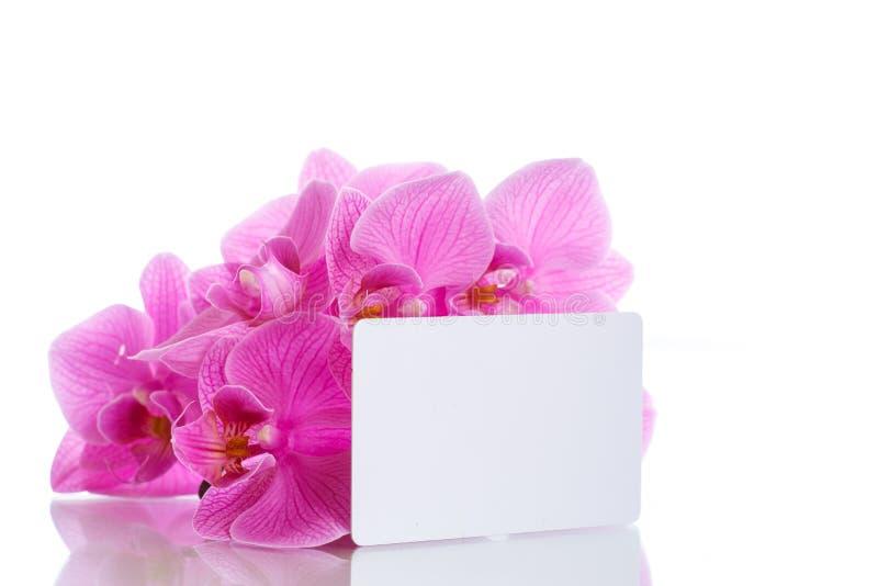 Flores púrpuras hermosas del phalaenopsis imágenes de archivo libres de regalías