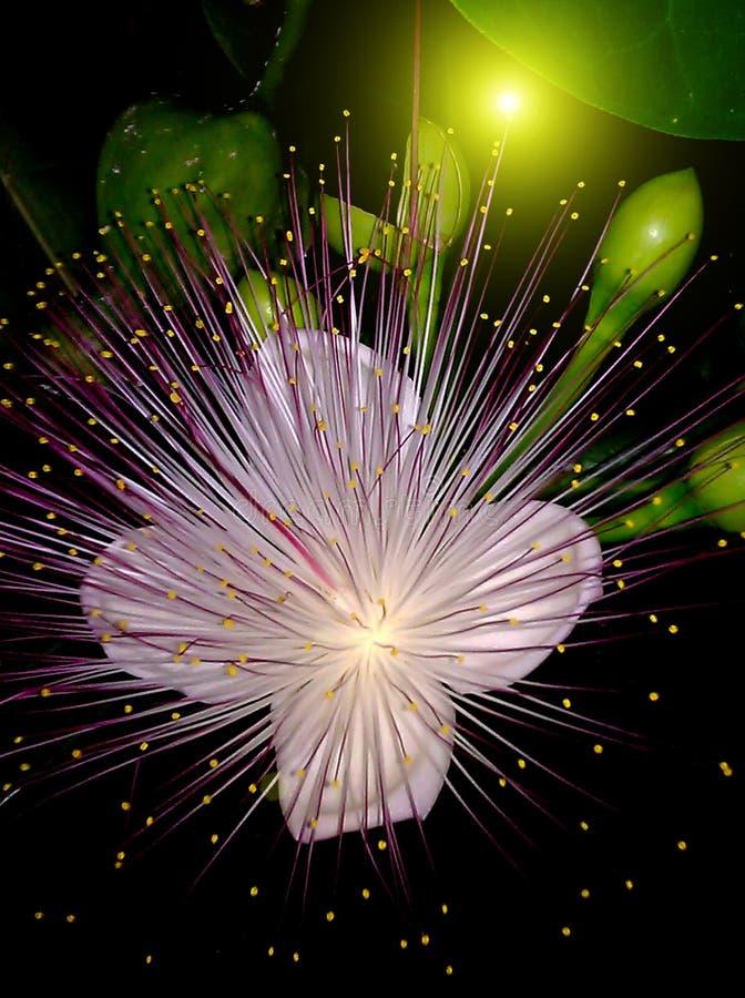 Flores púrpuras que florecen en la noche imagenes de archivo